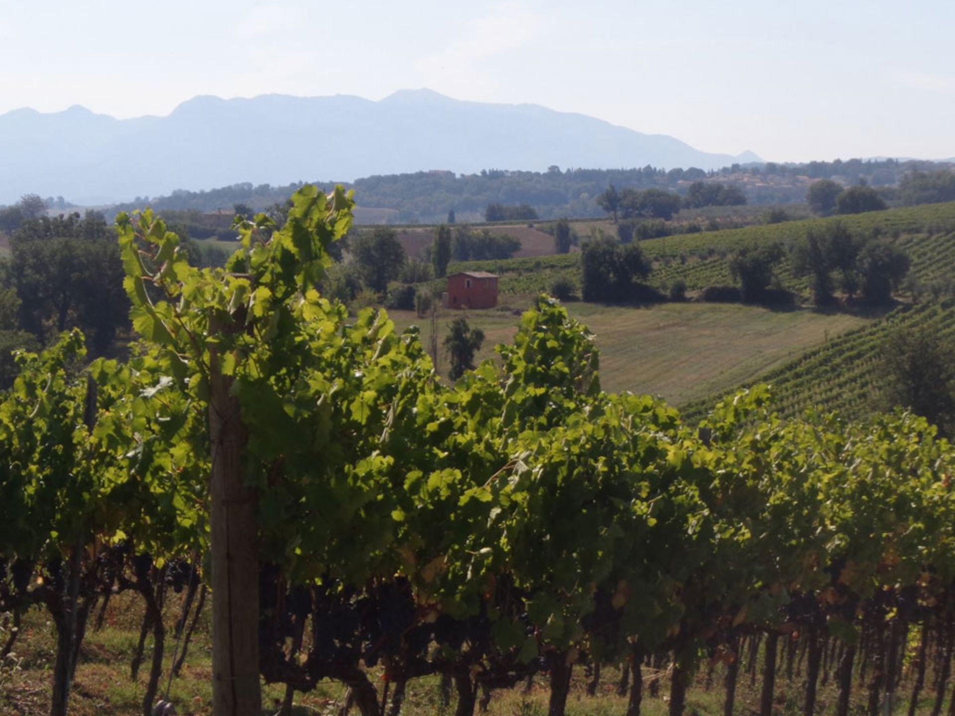 tuscany-wine-excursion_Italy-Tour-With-Theresa_01