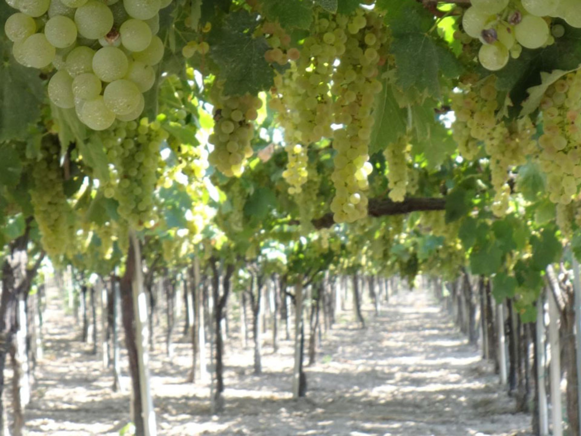 tuscany-wine-excursion_Italy-Tour-With-Theresa_02